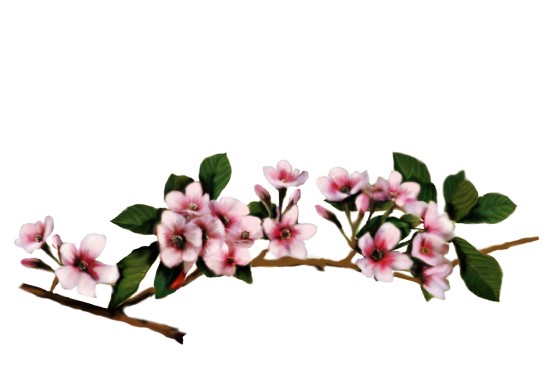 Spring Flowers, Autumn Leaves, Grapes Cherry Blossoms Artwork