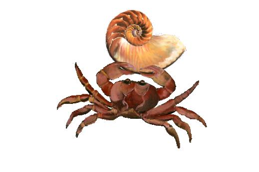 Seashells, Fish, and Beach Crab Shell 01 Artwork