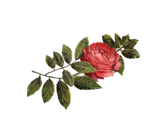 Spring Flowers, Autumn Leaves, Grapes Crimson Rose Artwork