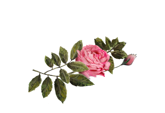 Spring Flowers, Autumn Leaves, Grapes Dark Pink Rose Artwork