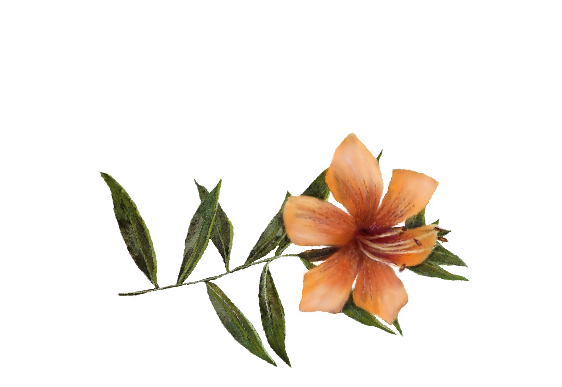 Spring Flowers, Autumn Leaves, Grapes Daylily Artwork
