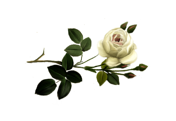 Spring Flowers, Autumn Leaves, Grapes Alba Rose Artwork