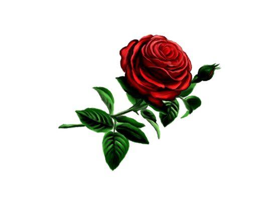 Spring Flowers, Autumn Leaves, Grapes Baron Rose Artwork