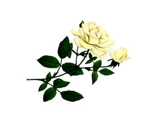 Spring Flowers, Autumn Leaves, Grapes Dutchess Rose Artwork