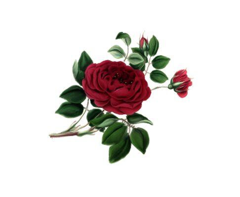 Spring Flowers, Autumn Leaves, Grapes Gullica Rose Artwork