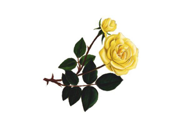 Spring Flowers, Autumn Leaves, Grapes Perrier Rose Artwork