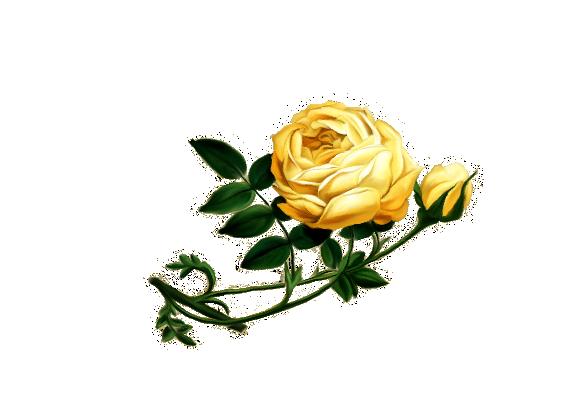 Spring Flowers, Autumn Leaves, Grapes Superb Rose Artwork