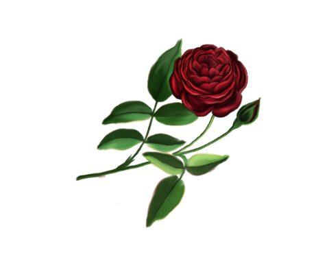 Spring Flowers, Autumn Leaves, Grapes Superior Rose Artwork
