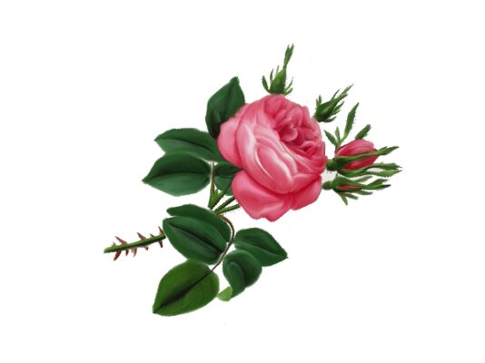 Spring Flowers, Autumn Leaves, Grapes Victorian Rose Artwork