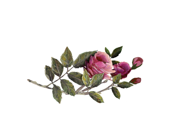 Spring Flowers, Autumn Leaves, Grapes Fuschia Rose Artwork