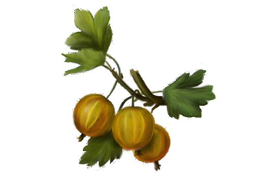 Spring Flowers, Autumn Leaves, Grapes Gooseberry Artwork