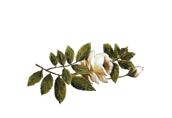 Spring Flowers, Autumn Leaves, Grapes Ivory Rose Artwork