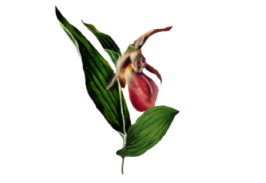 Spring Flowers, Autumn Leaves, Grapes Lady Slipper Orchid Artwork
