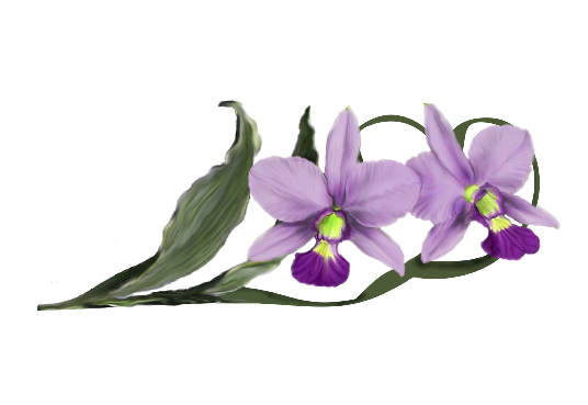Spring Flowers, Autumn Leaves, Grapes Laelia Orchid Artwork