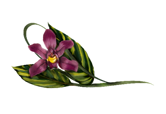Spring Flowers, Autumn Leaves, Grapes Laelia Violet Orchid Artwork