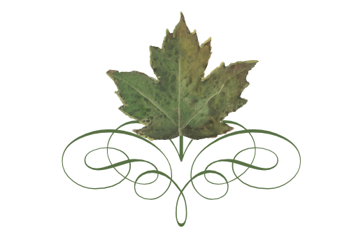 Spring Flowers, Autumn Leaves, Grapes Leaf Flourish 13 Artwork