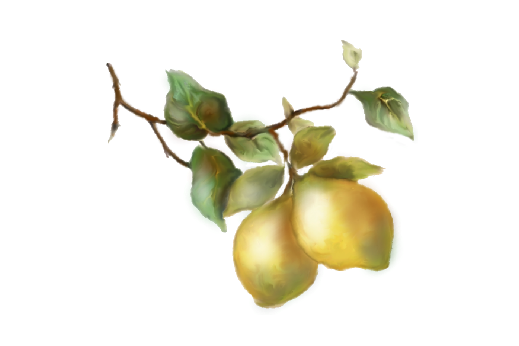 Spring Flowers, Autumn Leaves, Grapes Lemons Artwork