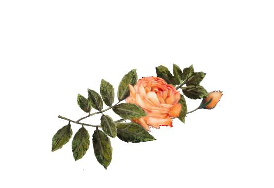 Spring Flowers, Autumn Leaves, Grapes Light Orange Rose Artwork