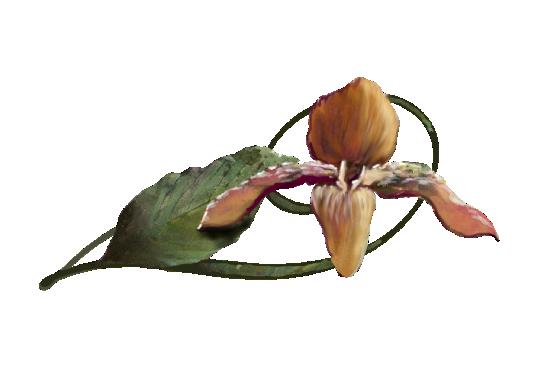 Spring Flowers, Autumn Leaves, Grapes Mokara Orchid Artwork