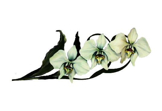 Spring Flowers, Autumn Leaves, Grapes Moon Orchid (ivory) Artwork