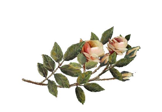 Spring Flowers, Autumn Leaves, Grapes Orange Rose Artwork