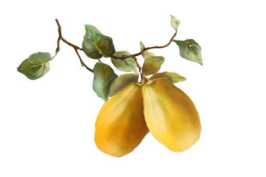 Spring Flowers, Autumn Leaves, Grapes Papaya Artwork