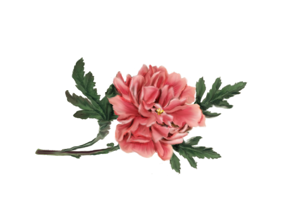 Spring Flowers, Autumn Leaves, Grapes Peony (pink) Artwork