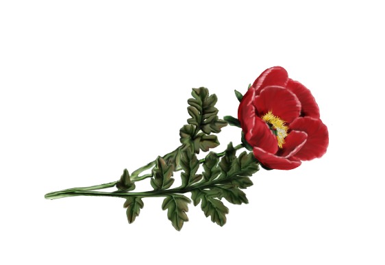 Spring Flowers, Autumn Leaves, Grapes Peony (red) Artwork