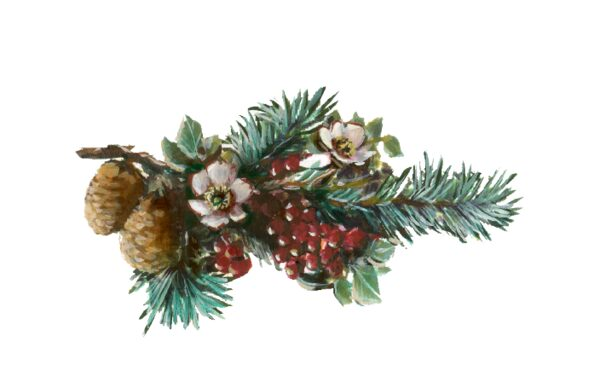 Winter and Holiday Pine Boughs Artwork