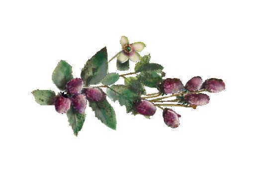 Spring Flowers, Autumn Leaves, Grapes Raspberries 01 Artwork