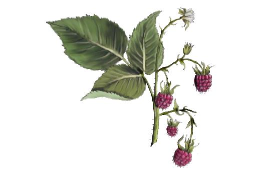 Spring Flowers, Autumn Leaves, Grapes Raspberries 02 Artwork
