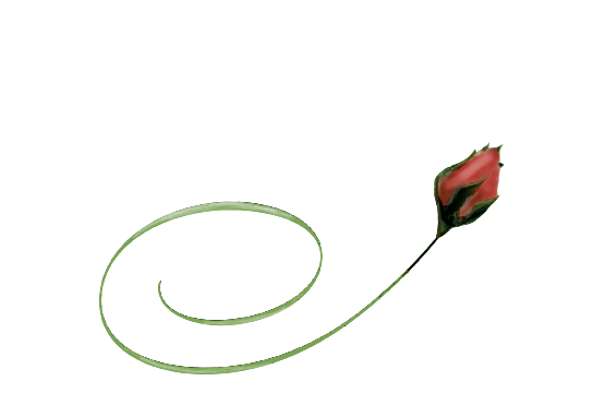 Spring Flowers, Autumn Leaves, Grapes Red Rose Bud Artwork