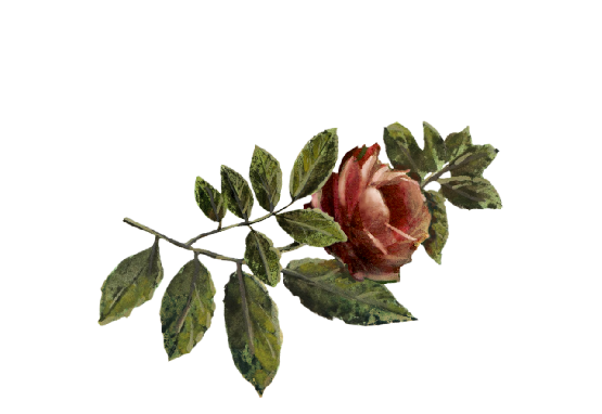 Spring Flowers, Autumn Leaves, Grapes Red Rose Artwork