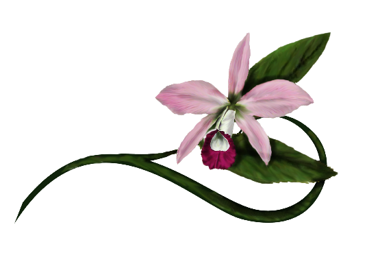 Spring Flowers, Autumn Leaves, Grapes Reed Orchid Illustration Artwork