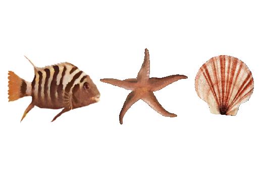 Seashells, Fish, and Beach Sea Life Pattern 01 Artwork
