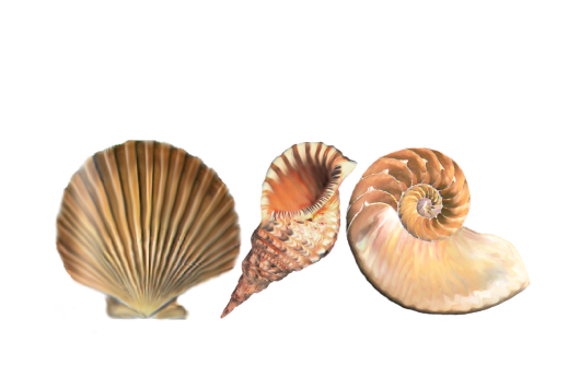 Seashells, Fish, and Beach Seashell Pattern 02 Artwork