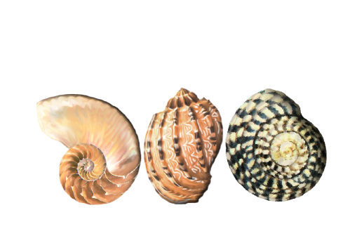 Seashells, Fish, and Beach Seashell Pattern 01 Artwork