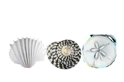 Seashells, Fish, and Beach Seashell Pattern 03 Artwork