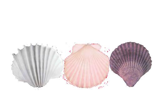 Seashells, Fish, and Beach Seashell Pattern 04 Artwork