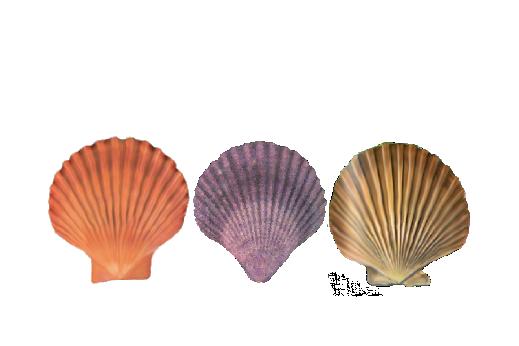Seashells, Fish, and Beach Seashell Pattern 05 Artwork