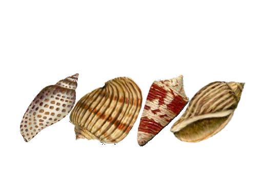 Seashells, Fish, and Beach Seashell Pattern 06 Artwork