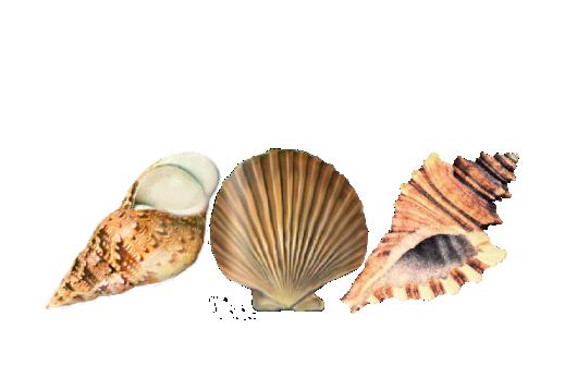 Seashells, Fish, and Beach Seashell Pattern 07 Artwork