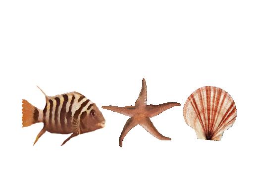 Seashells, Fish, and Beach Seashell Pattern 10 Artwork