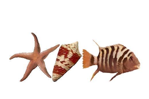 Seashells, Fish, and Beach Seashell Pattern 11 Artwork