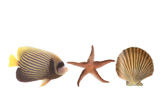 Seashells, Fish, and Beach Seashell Pattern 12 Artwork