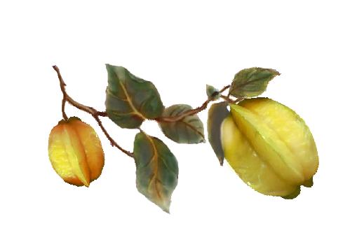 Spring Flowers, Autumn Leaves, Grapes Star Fruit Artwork