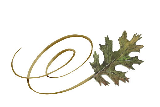 Spring Flowers, Autumn Leaves, Grapes Swirly Black Oak Leaf Artwork