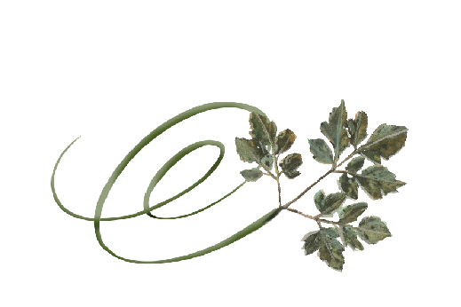 Spring Flowers, Autumn Leaves, Grapes Swirly Honey Locust Leaf Artwork