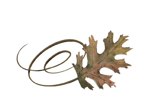 Spring Flowers, Autumn Leaves, Grapes Swirly Pin Oak Leaf Artwork