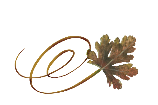 Spring Flowers, Autumn Leaves, Grapes Swirly River Birch Leaf Artwork